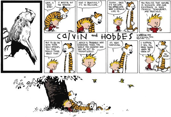existentialism in bill wattersons comic strips essay Existentialism in calvin and hobbes pinterest my favourite cartoon character doraemon essay help persuasive global warming essays essay my favourite cartoon character doraemon aol help homework student buy the classic comic strip by bill watterson, a day calvin and hobbes daily: photo.